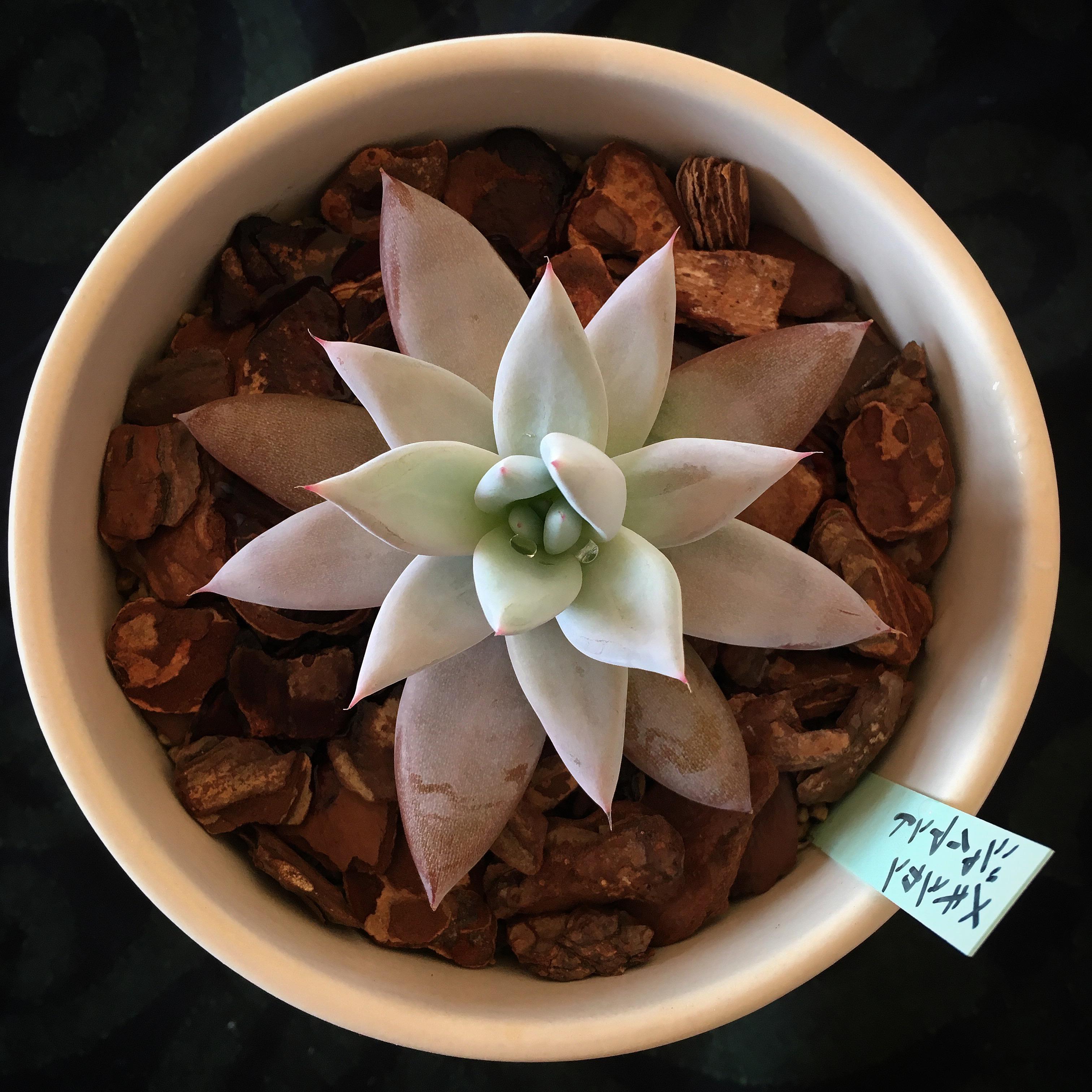 UKI-taniku 植物観察日誌。